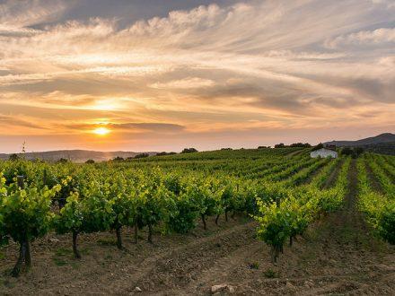 alentejo_wine
